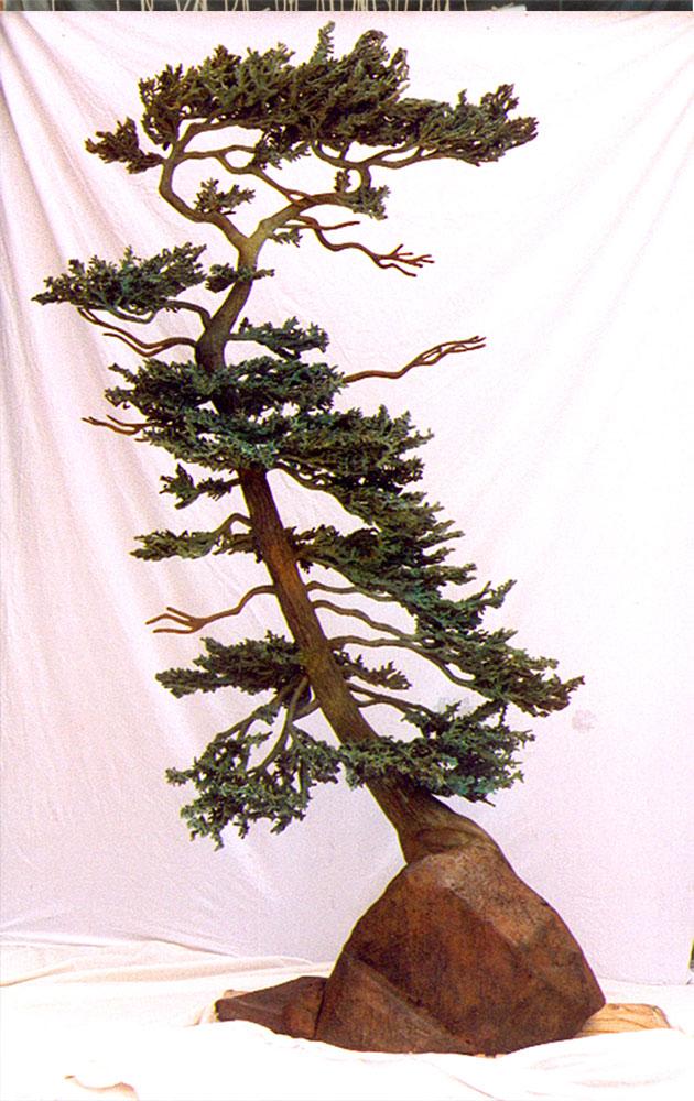 Casons-Pine-Bio